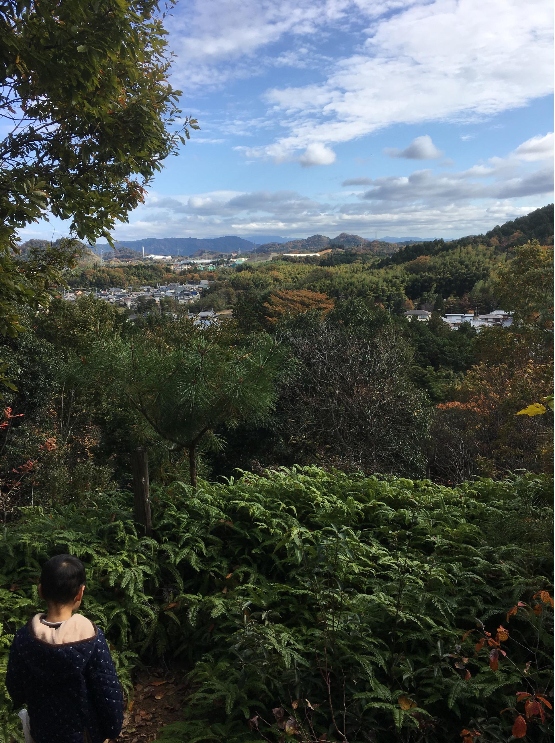 自然観察の森 展望台
